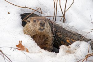 Happy Groundhog Day from Stikins Name Labels