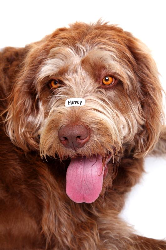 Harvey name labels